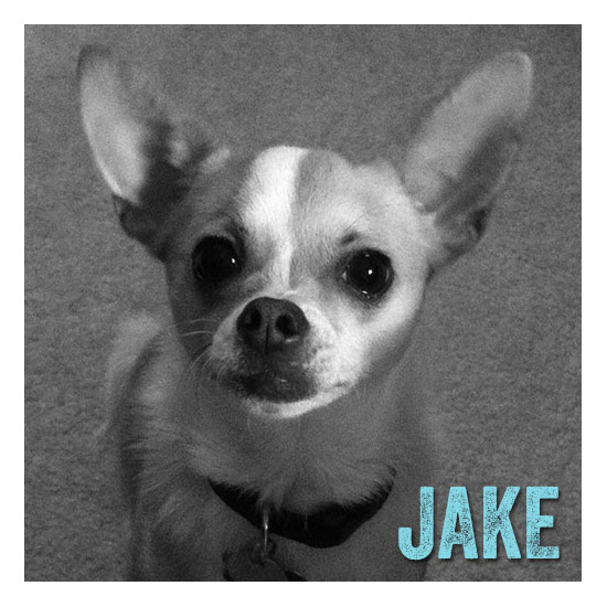 Jake - ZigZag Wags Co-Founder