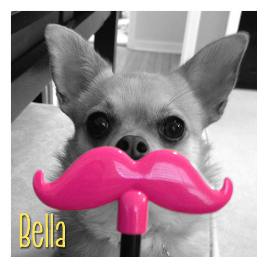 Bella - ZigZag Wags Co-Founder