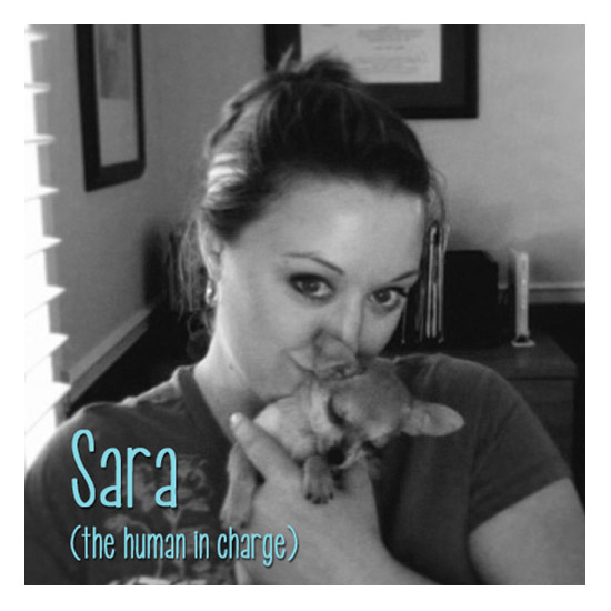 Sara Jade - owner of ZigZag Wags