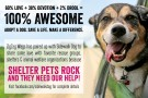 Shelter Pets Rock and they need our help!