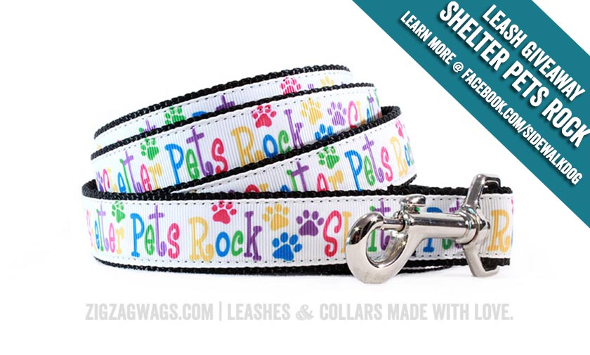 Shelter Pets Rock Leash Giveaway