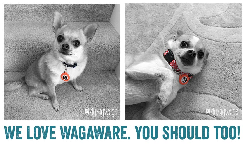 We LOVE WagAware!